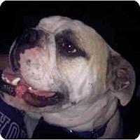 Adopt A Pet :: Brutus - Arlington, TX