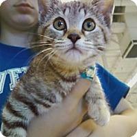 Adopt A Pet :: Lea - Riverhead, NY