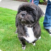 Adopt A Pet :: Bear - Gig Harbor, WA
