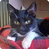 Adopt A Pet :: Wasabi - Island Park, NY