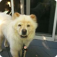 Adopt A Pet :: Kodiak - Dix Hills, NY