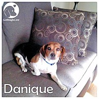 Adopt A Pet :: Danique - Pittsburgh, PA