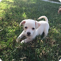 Adopt A Pet :: Junior - Brea, CA