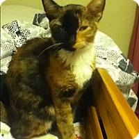 Adopt A Pet :: Ms Beasley - San Diego, CA
