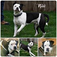 Adopt A Pet :: Finn - Sioux Falls, SD