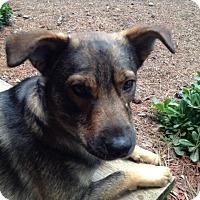 Adopt A Pet :: Kirby - Austin, TX