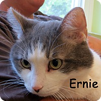 Adopt A Pet :: Ernie - Warren, PA