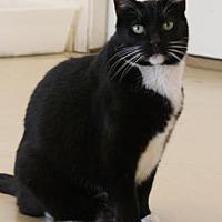 Adopt A Pet :: Sylvia - Morgan Hill, CA