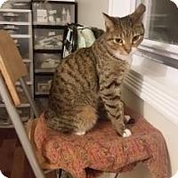 Adopt A Pet :: Choco - New York, NY