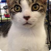 Adopt A Pet :: George - Kingwood, TX