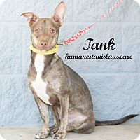 Terrier (Unknown Type, Small) Mix Dog for adoption in Modesto, California - Tank