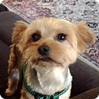 Adopt A Pet :: Delilah - Sinking Spring, PA