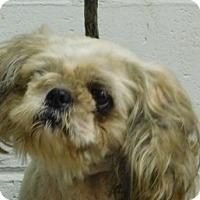 Adopt A Pet :: Murphy - Saginaw, MI