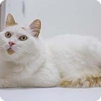 Adopt A Pet :: Cody - Merrifield, VA