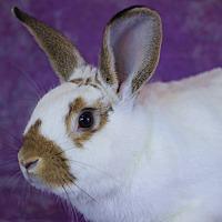Adopt A Pet :: Tater-tot - Wilmington, NC