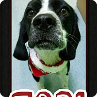 Adopt A Pet :: Tobi - Edwards AFB, CA