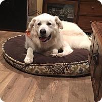 Adopt A Pet :: Pebbles - Bedford Hills, NY
