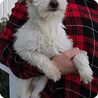 Adopt A Pet :: TULIP - Corona, CA