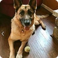 Adopt A Pet :: Ariel - Kansas City, MO