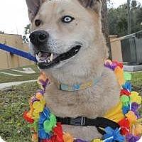 Adopt A Pet :: Charger - New Smyrna Beach, FL