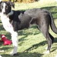 Adopt A Pet :: Justice - Phelan, CA