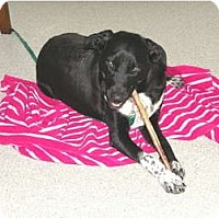 Adopt A Pet :: Becca - PENDING! - kennebunkport, ME