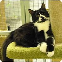 Adopt A Pet :: Splash - Mission, BC