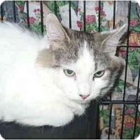 Adopt A Pet :: Sparsley - Colmar, PA
