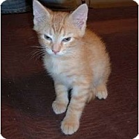 Adopt A Pet :: Tansy - Troy, OH