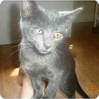 Adopt A Pet :: Charlie - Summerville, SC