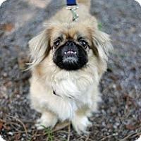Adopt A Pet :: Fergie - Tinton Falls, NJ