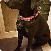 Adopt A Pet :: GYPSY - Hurricane, UT