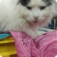 Adopt A Pet :: Scotland - Trevose, PA