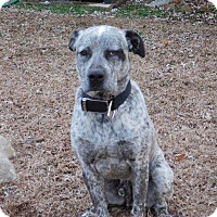 Adopt A Pet :: Bosco - Aurora, CO