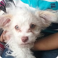 Adopt A Pet :: Lola - El Cajon, CA