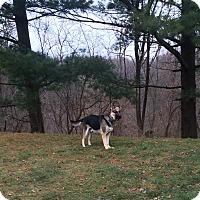 Adopt A Pet :: Hank - Howell, MI