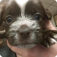 Adopt A Pet :: Chaplin - Ogden, UT