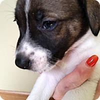 Adopt A Pet :: Jackie - Cincinnati, OH