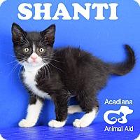 Adopt A Pet :: Shanti - Carencro, LA
