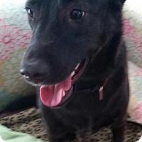 Adopt A Pet :: Scooby - Royal Palm Beach, FL