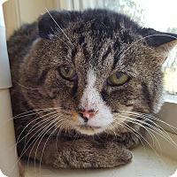 Adopt A Pet :: Tank - Salisbury, MA