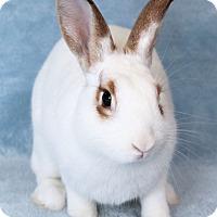Adopt A Pet :: Sparkle - Encinitas, CA