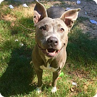Adopt A Pet :: Ellie - San Jose, CA