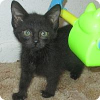 Adopt A Pet :: Ebony - New Smyrna Beach, FL