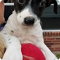 Adopt A Pet :: Winnie - Fort Atkinson, WI