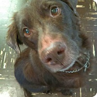 Adopt A Pet :: Buddy - Sharon Center, OH