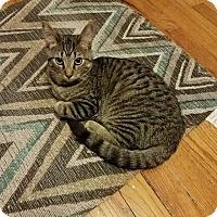 Adopt A Pet :: Myrtle - Columbus, OH