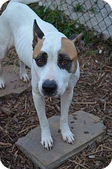 Labrador Retriever Mix Dog for adoption in Houston, Texas - Lady