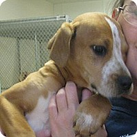 Adopt A Pet :: Cupid - Ludington, MI