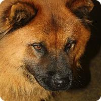 Adopt A Pet :: Sunsai - COVENTRY, CT